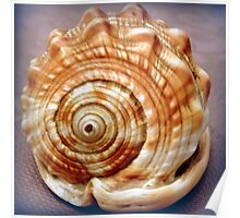 Natural spirals in a seashell Poster