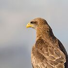 Yellow-billed Kite Portrait by M.S. Photography/Art