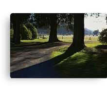 Serenity of old trees Canvas Print