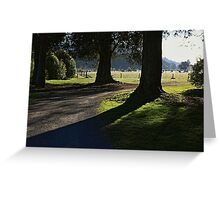 Serenity of old trees Greeting Card