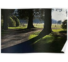 Serenity of old trees Poster