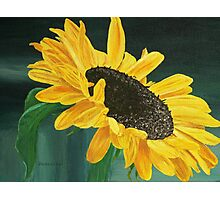 Golden Sunflower Photographic Print