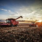 Harvesting at Sunset by Steve Baird