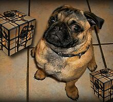 *•.¸♥♥¸.•*DON'T U BE CALLING ME SQUARE - PUG PICTURE - CARD*•.¸♥♥¸.•* by ✿✿ Bonita ✿✿ ђєℓℓσ