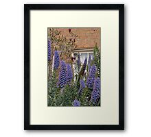 Window by 'Donna Williams' Framed Print