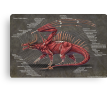 Western Dragon Muscle Anatomy Canvas Print