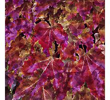 Autumn Leaves Abstract Photographic Print
