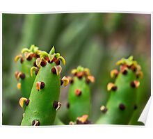 Euphorbia from Madagascar Poster