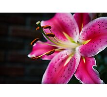 A Study In Lilies - XVIII Photographic Print