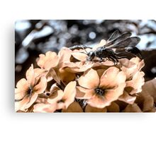 Mud Dawber Wasp Canvas Print