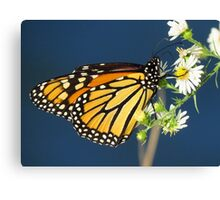 Autumn Monarch Butterfly Canvas Print