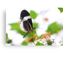 Small blue Grecian butterfly Canvas Print