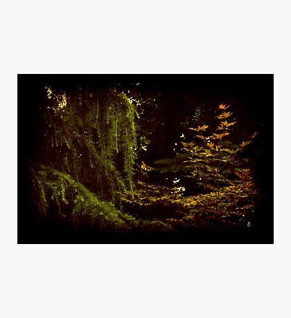 Hidden in Light Photographic Print