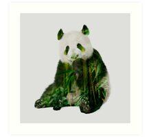 Giant panda eating bamboo Art Print