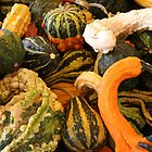 Autumn Gourds by WalnutHill