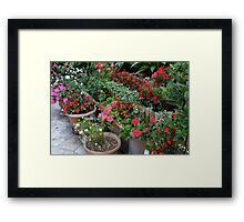 Colorful flowers in flower pots in the garden Framed Print