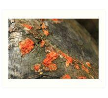 Autumnal Rot Art Print