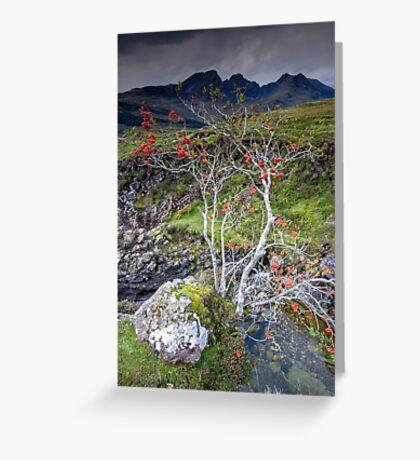 Highland Rowan Tree Greeting Card