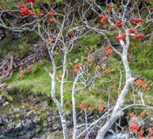 Highland Rowan Tree Sticker