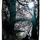 A Last Autumn by Graham Povey