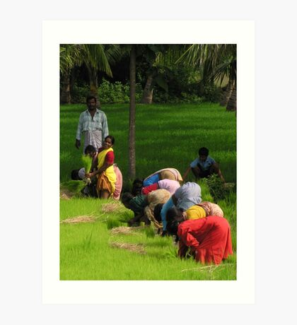 The colour of the sari - women in rice fields Art Print
