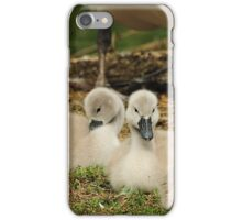 Cygnets all in a line iPhone Case/Skin