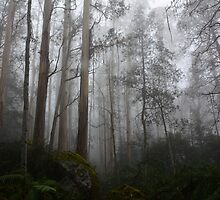 Enchanted Forrest by MickCook