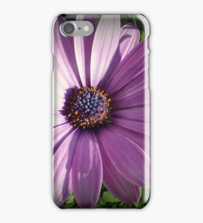 Osteospermum - Blue eyed African daisy iPhone Case/Skin