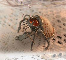 Goggo/Insect range - Hermit Crab by Maree  Clarkson