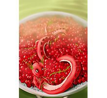 Berry dragon Photographic Print