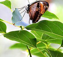Butterfly Enjoyment by vette
