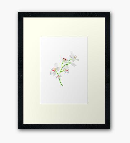 Isolated Orquideas Blossom Photo Framed Print