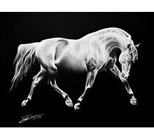 """""""To Dance in the Darkness"""" - Andalusian stallion Photographic Print"""