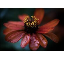 Blume, Flower Photographic Print