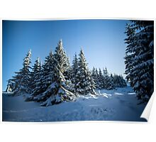 Snow Covered Trees/ Winter Fern Poster