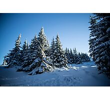 Snow Covered Trees/ Winter Fern Photographic Print