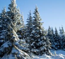 Snow Covered Trees/ Winter Fern Sticker