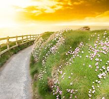wild flowers along a cliff walk path by morrbyte