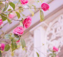 Pink Camellia by lightwanderer