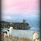 winter beach and castle view with dogs by morrbyte