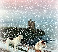 winter beach and castle view with two dogs by morrbyte