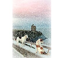 winter beach and castle view with two dogs Photographic Print