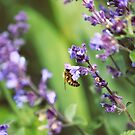 Bee on Lavender by Vicki Field