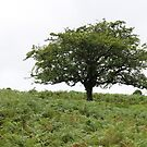 One Tree at Black Tor by kalaryder