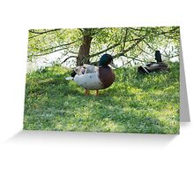 duck in the farm Greeting Card