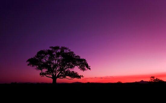 My New Tree - Maclean Qld Australia by Beth  Wode