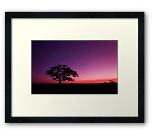 My New Tree - Maclean Qld Australia Framed Print