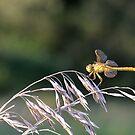 Yellow Dragon MN by Ben Waggoner