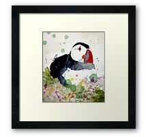 puffin on the ledge Framed Print