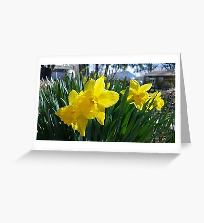 Daffodils in the Summer Greeting Card